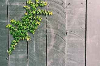green leaf on gray wooden fence